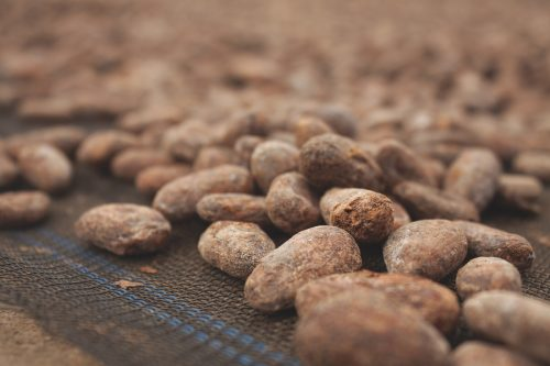Drying Cacao Beans from Adioesmac